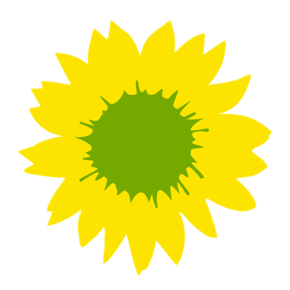 Sonnenblume auf weiss clipped
